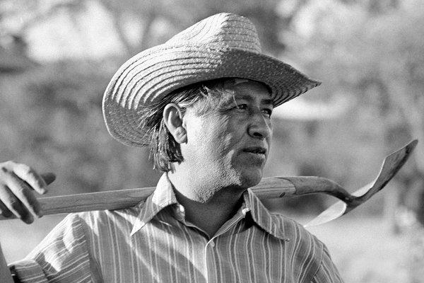 Cesar Chavez Quotes Cesar Chavez Quotes on Heart Cesar Chavez Quotes on Non Violence Cesar Chavez Quotes Si Se Puede Cesar Chavez Quotes on Civil Rights Cesar Chavez Quotes on Community Cesar Chavez Quotes on Knowledge Cesar Chavez Quotes about Dreams Short Quotes on Animals by Cesar Chavez and Immigration Cesar Chavez Quotes about Labors Cesar Chavez Quotes on Organizing Cesar Chavez Quotes from the Movie Cesar Chavez Quotes about Farm Workers and Health Cesar Chavez Quotes on Pesticides Quotes on Social Change by Cesar Chavez Cesar Chavez Quotes about Food Cesar Chavez Quotes You Cannot Uneducated Great Quotes on Environment by Cesar Chavez Cesar Chavez Quotes about Earth Cesar Chavez Quotes on Education 100+ Cesar Chavez Quotes - American Labor Leader & Activist We Have Cesar Chavez Quotes For Food, Heart, Community, Immigration, Movie, Health, Education, Environment, Pesticides, Dreams, And So on.