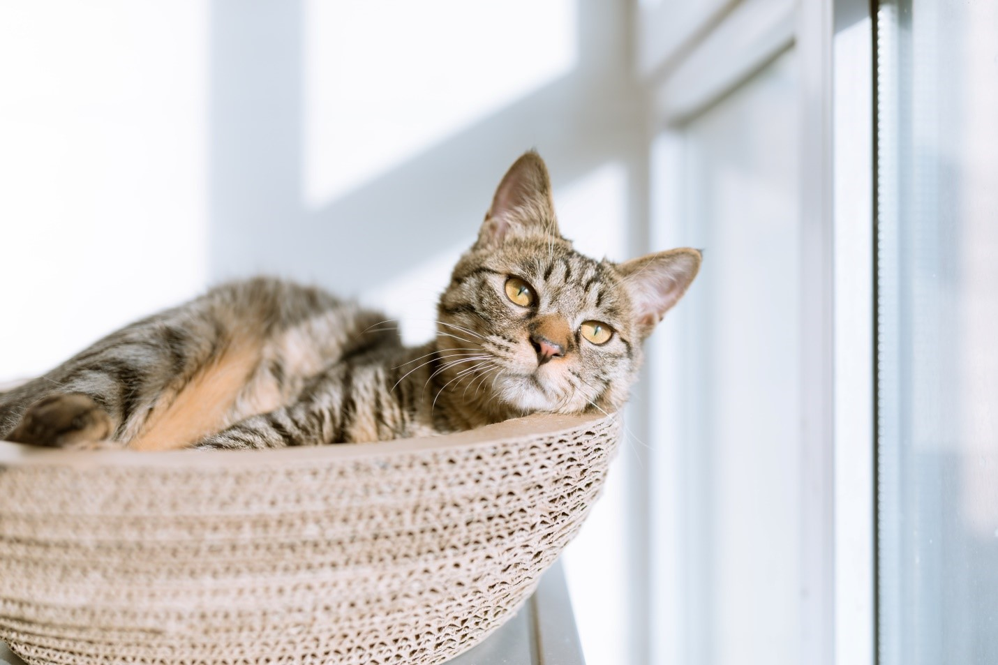 Tips For A Healthy Indoor Feline: CBD Oil For Cats
